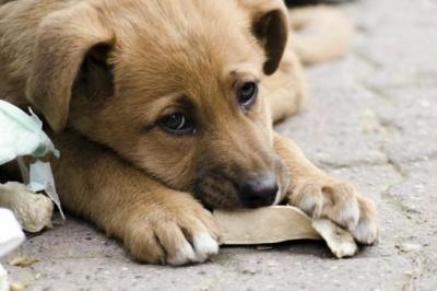 У Чернівцях волонтери розкажуть про благодійний притулок для тварин