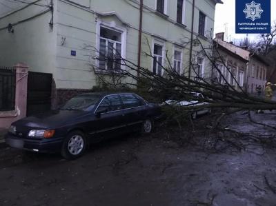 Повалені дерева і стовпи, потрощені автівки: наслідки нічного буревію на Буковині