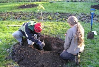 Чернівчанам пропонують посадити дерева біля багатоповерхівок