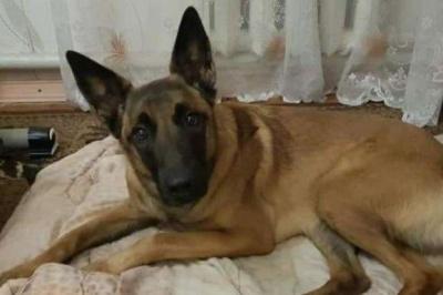 Собака врятував літню жінку, що впала у 3-метровий погріб