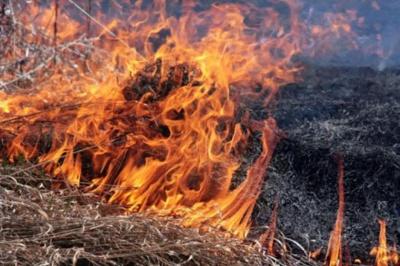Буковинці продовжують спалювати суху траву: за добу згоріли 13 гектарів