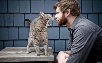 Вчені розповіли, чому кожному чоловікові потрібен кіт