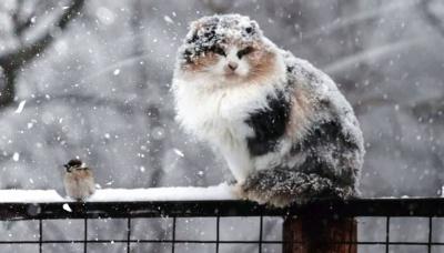 На українців очікує похолодання і сніг