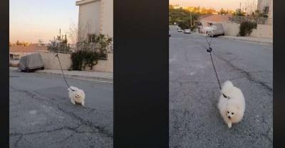 На Кіпрі дрон вигулював пса, поки його господар сидів вдома на карантині (відео)