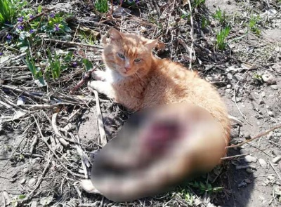 У Чернівцях патрульні врятували пораненого кота