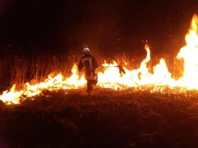 Буковинці продовжують спалювати суху траву: рятувальники розповіли про масштабну пожежу