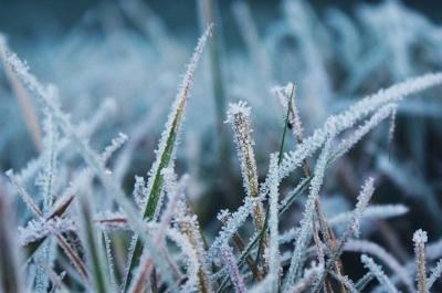 В Україні вночі прогнозують заморозки