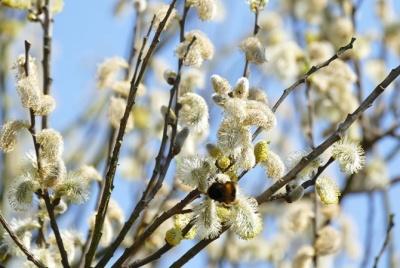 Як римо-католики Чернівців відзначать 5 квітня Вербну неділю