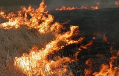 Горіла суха трава: внаслідок пожежі на Буковині травмувався чоловік