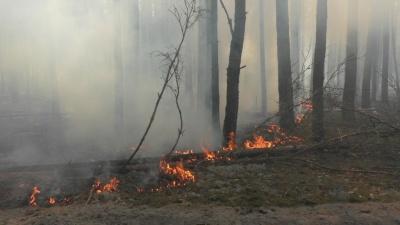 Названо ймовірні причини масштабних пожеж у Чорнобильській зоні
