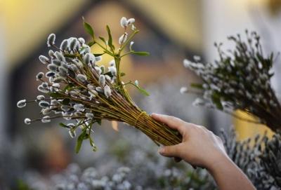 Вербна неділя: чому освячують вербові гілки