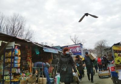 Каспрук порадив підприємцям не йти на ринки, Осачук про закриття нічого не сказав