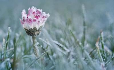 Синоптики попередили про заморозки до -5 градусів