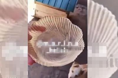 На Буковині підлітки напоїли собаку спиртним і виклали відео в мережу: поліція проводить перевірку