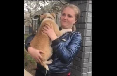Юна буковинка зізналась, навіщо напоїла собаку спиртним - відео