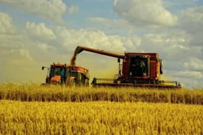 Мінекономіки: Урожай зерна в Україні через посуху і COVID-19 скоротиться на 20%
