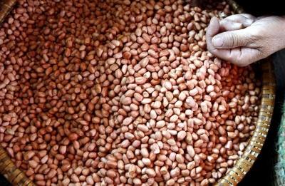 Все про арахіс: користь, шкода, калорійність