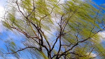 Штормове попередження: синоптики прогнозують сильний вітер та грозу на Буковині