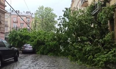 Негода в Чернівцях: у центрі міста дерево впало на припарковані авто – відео