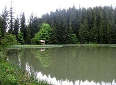 Невідома Буковина: гірське озеро «без дна», якому 300 тисяч років