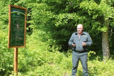 Саджанець за рік виросте на метр: на Буковині триває лісопосівна кампанія