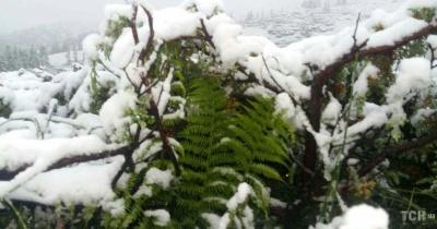 На Буковину насувається мокрий сніг: синоптик здивувала новим прогнозом погоди