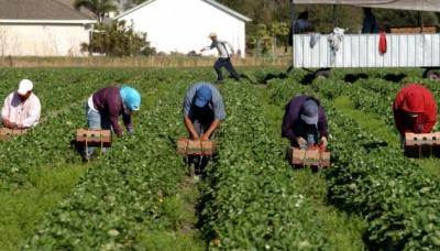 «Потрібні працівники, але їх зараз нема»: Польща потерпає від нестачі заробітчан з України