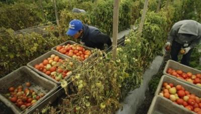 Італія має намір легалізувати ще пів мільйона трудових мігрантів