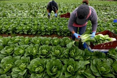 Уряд Італії вирішив тимчасово легалізувати заробітчан
