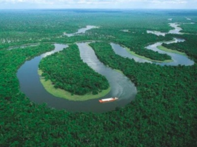 Причиною наступної світової пандемії може стати вірус з Амазонії - вчений
