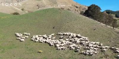 Робопес від Boston Dynamics навчився пасти овець - відео