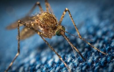 У Харкові зареєстрували випадок захворювання на малярію