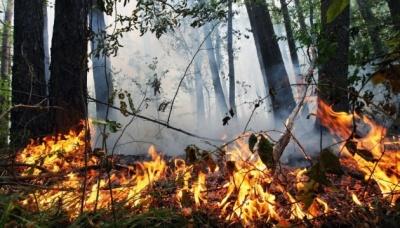 На Буковині зберігається надзвичайна пожежна небезпека