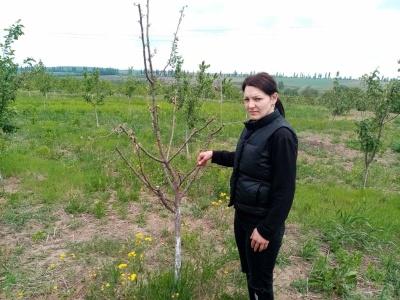 «Полуницю вже не врятувати»: заморозки побили врожай у садах і городах буковинців