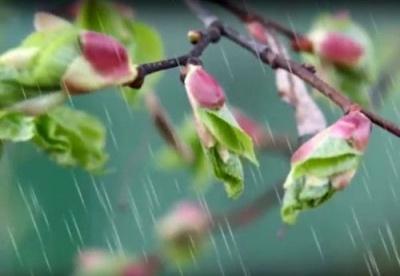 Кінець травня буде прохолодним та дощовим