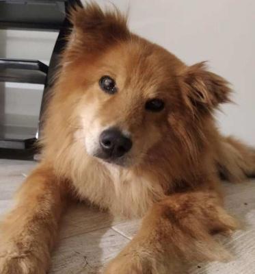 «Просто побачила очі. Сліпі»: волонтерка з Чернівців прихистила незрячого собаку