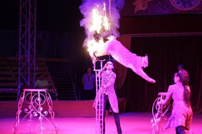 Анекдот дня: дзвінок до цирку