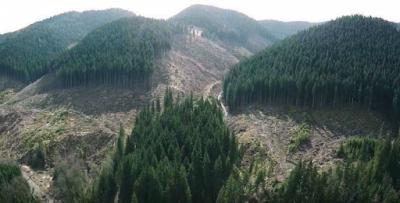 Українські ліси інвентаризують
