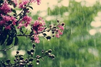 Спека і грози: якою буде погода на Буковині у затяжні вихідні