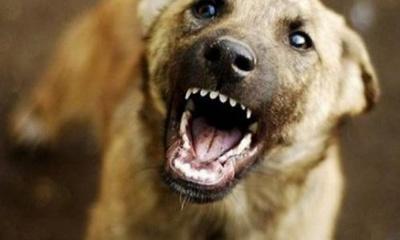 У селі на Буковині собака покусав 3-річну дитину