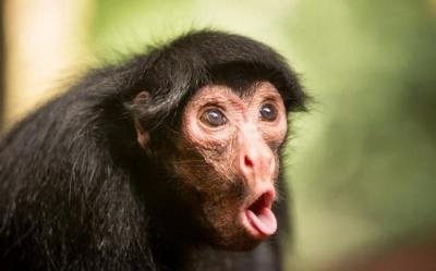 Анекдот дня: про мавпу і кризу
