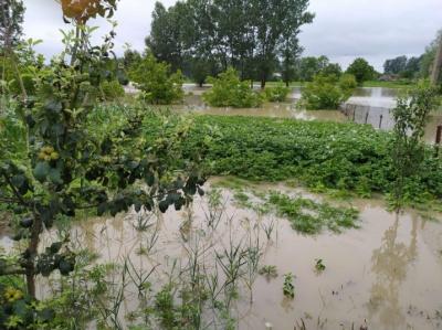 На Буковині негода пошкодила 3 тисячі гектарів сільгоспкультур