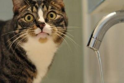 У Чернівцях до завтрашнього вечора не буде води: стався новий прорив на водогоні