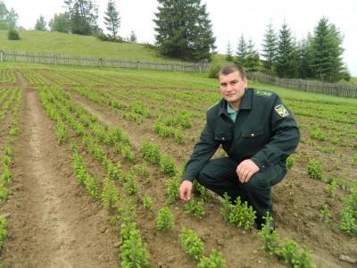 Чотири лісгоспи на Буковині отримали нових керівників