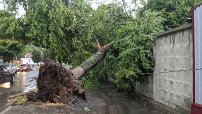 Негода у Хмельницькому повалила дерева та стовпи