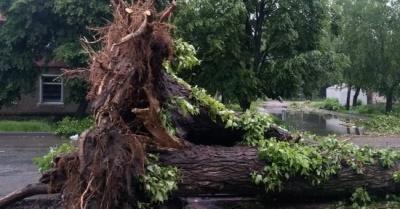 Селами Буковини пронеслась негода: вітер пошкодив 200 будинків і повалив дерева