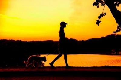 Анекдот дня: про нічну прогулянку