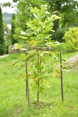 Посадив тисячі дерев: на Буковині облаштовують дендропарк