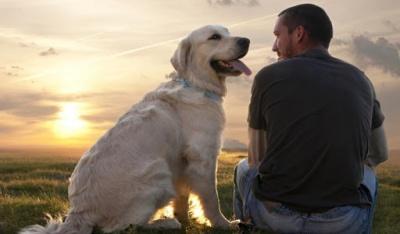 Для правильного виховання собаки можна скористатися кількома лайфхаками.