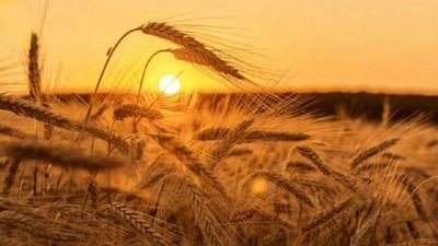 Якою буде погода до кінця літа: детальний прогноз синоптиків